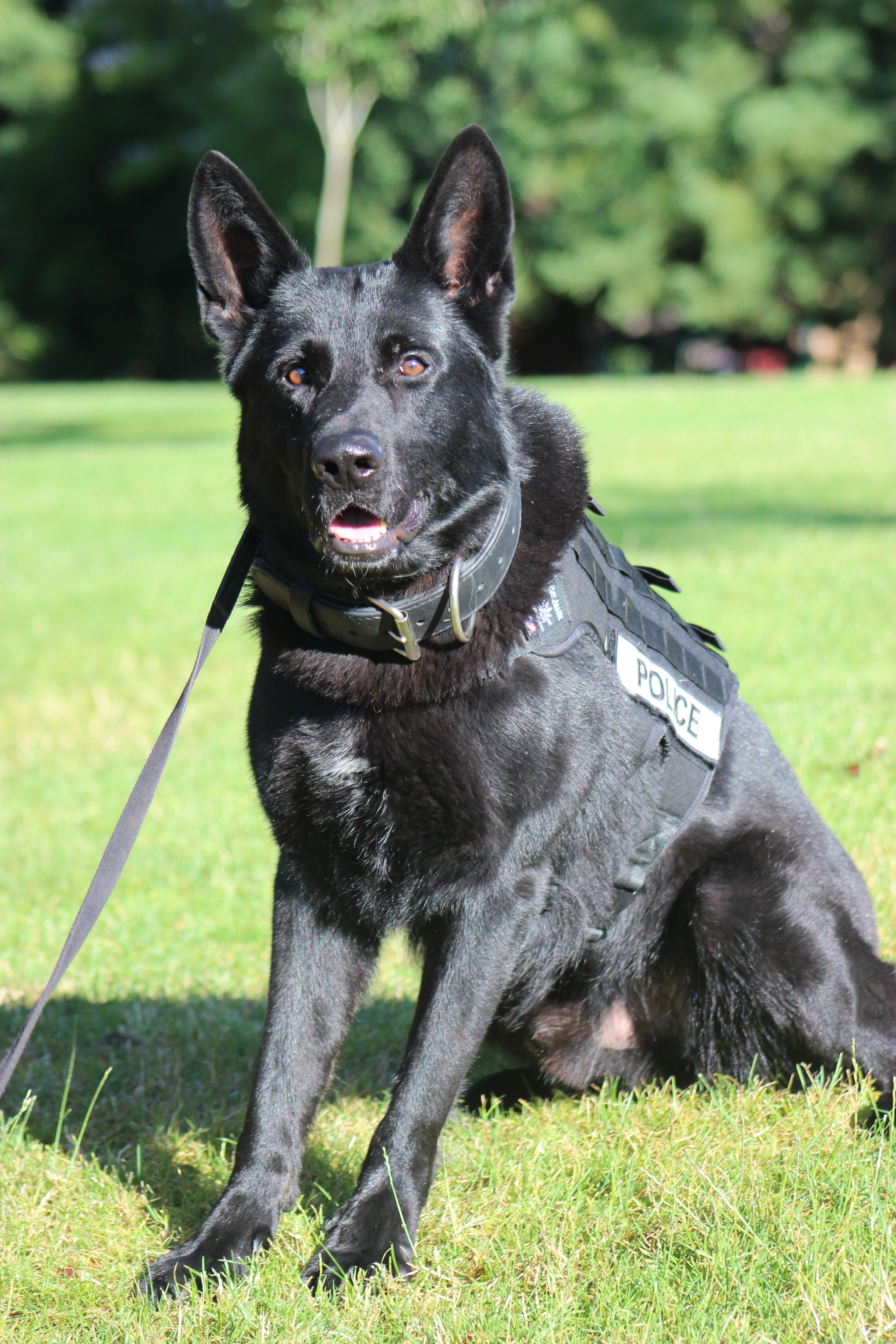 K9 Axel tracks Suspects Fleeing from Stolen vehicle (Photo) featured image
